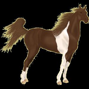 Riding Horse Irish Hunter Chestnut