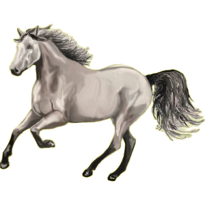Riding Horse Arabian Horse Mouse Gray