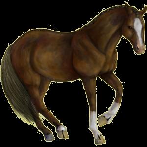 Riding Horse Paint Horse Chestnut Tobiano