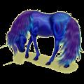 Unicorn pony Connemara Dark Bay