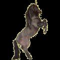 Riding unicorn Curly Cherry bay