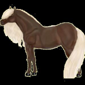 Riding Horse Argentinean Criollo Bay Tovero