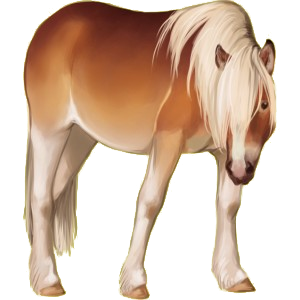 Pony Australian Pony Mouse Gray