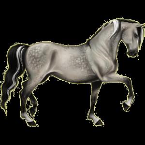 Riding pegasus Quarter Horse Dapple Gray