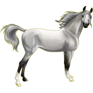 Riding Horse Thoroughbred Light Gray