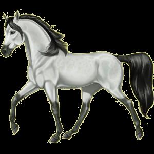 Riding Horse Mustang Bay