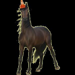 Riding Horse Quarter Horse Dark Bay