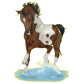 Riding Horse Paint Horse Liver chestnut Tobiano