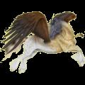 Pegasus Paint Horse Dark bay Tovero