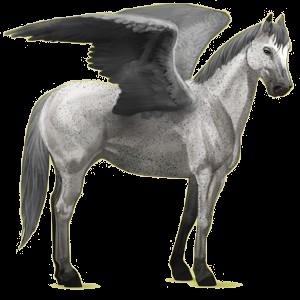 Riding pegasus Quarter Horse Light Gray
