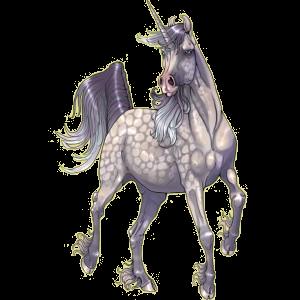 Riding unicorn Marwari Dapple Gray