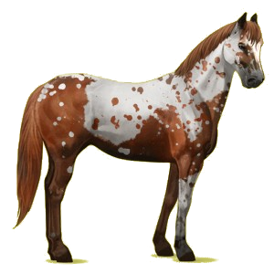 Riding Horse Paint Horse Chestnut Tobiano