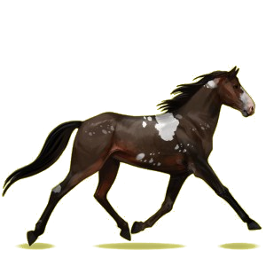 Riding Horse Morgan Bay