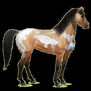 Riding pegasus Mustang Dark Bay
