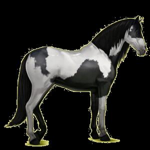 Riding Horse Purebred Spanish Horse Dapple Gray