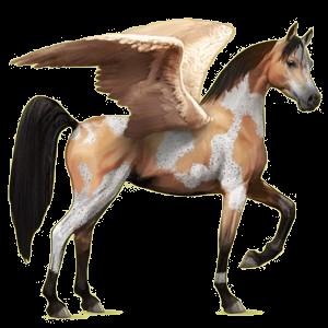 Riding pegasus Arabian Horse Dun