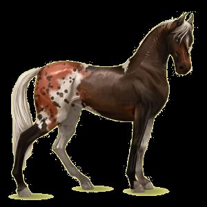 Riding Horse Marwari Mouse Gray