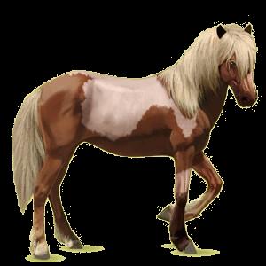 Riding Horse Brumby Dun