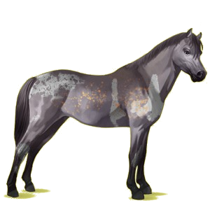 Pony Welsh Dapple Gray