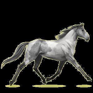 Riding Horse Standardbred Dapple Gray