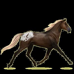 Riding Horse Standardbred Dark Bay
