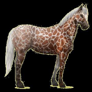 Riding pegasus Paint Horse Palomino Tovero