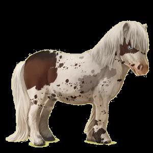 Pegasus pony Shetland Bay