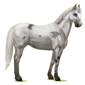 Riding Horse Paint Horse Mouse gray Tobiano