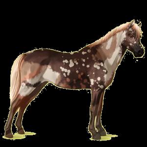 Pony Welsh Flaxen Chestnut
