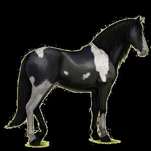 Riding Horse Purebred Spanish Horse Cremello