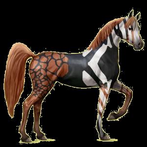 Riding Horse Arabian Horse Light Gray