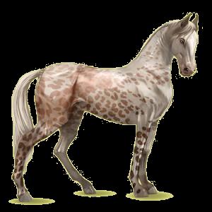 Riding Horse Marwari Cremello Tobiano