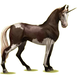 Riding unicorn Marwari Bay