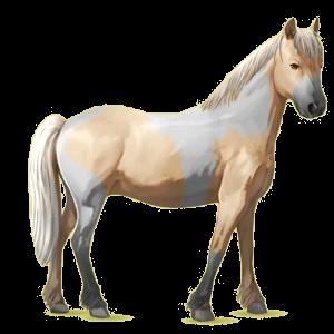 Pony Chincoteague Pony Palomino Tobiano