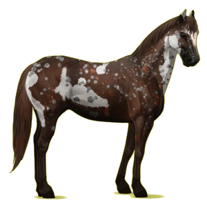 Riddle Riding Horse Paint Horse Liver Chestnut Tobiano 13193897