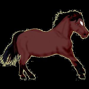 Pony Shetland Dapple Gray