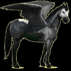 Riding pegasus Quarter Horse Roan