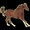 Riding Horse Standardbred Chestnut