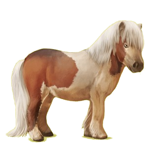Pegasus pony Shetland Black