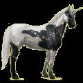 Riding unicorn Paint Horse Black Overo