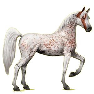 Riding Horse Arabian Horse Light Gray