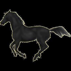 Riding Horse Standardbred Black