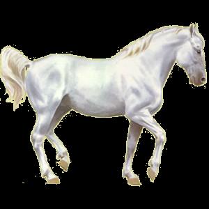 Riding Horse Quarter Horse Dapple Gray