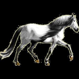 Riding Horse Purebred Spanish Horse Light Gray