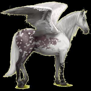 Riding pegasus Purebred Spanish Horse Dark Bay