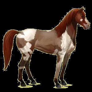 Riding Horse Mustang Light Gray