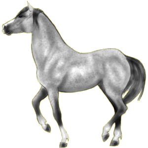 Pony Australian Pony Dapple Gray