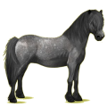 Pony Newfoundland Pony Roan