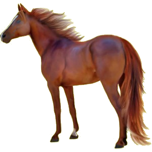 Riding Horse Thoroughbred Chestnut