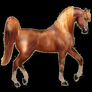 Riding pegasus Arabian Horse Chestnut